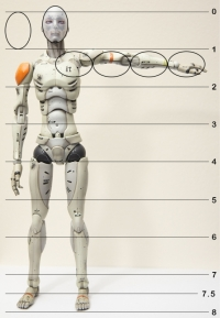 1/6 Synthetic Human Test Body - portions (2014)